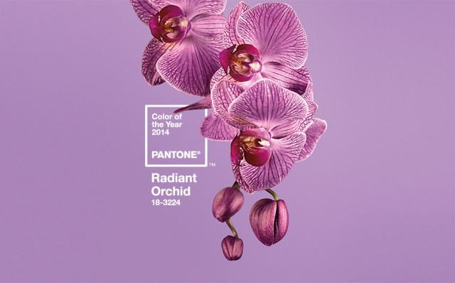 EBDLN-Pantone-RadiantOrchid-2014-1
