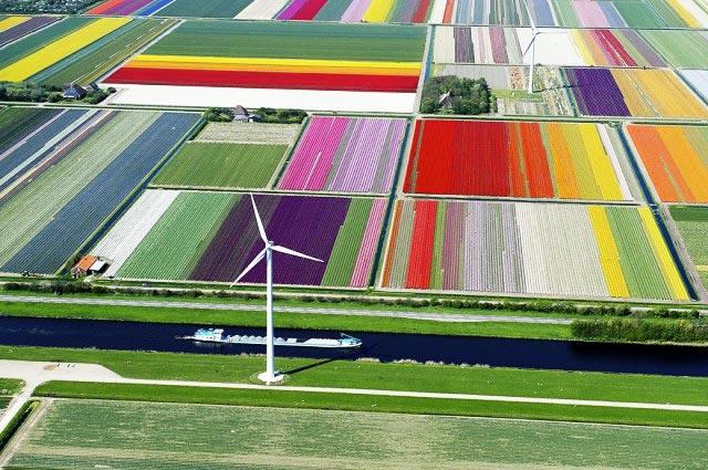 campos-tulipanes-holanda