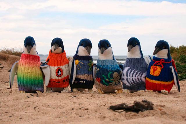 EBDLN-oldest-man-australia-knits-penguin-sweaters-1