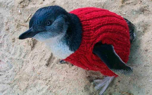 EBDLN-oldest-man-australia-knits-penguin-sweaters-3